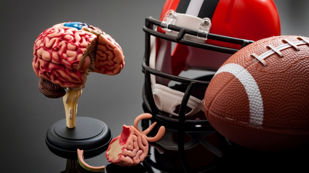 Мозг в подростковом возрасте