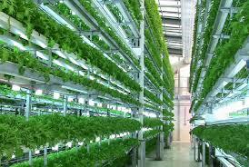 Вертикальные фермы