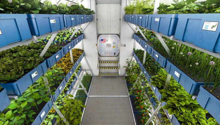 Космонавты – садоводы. Первые растения в космосе