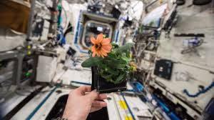 Выращивание растений в космосе