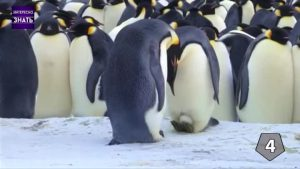 интересные факты о спаривании животных