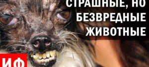 Самые страшные но безвредные животные