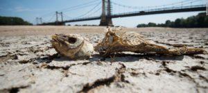 2019 год стал вторым самым жарким годом в истории Земли