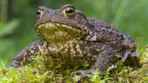 10 неожиданных животных, которых наши предки держали дома
