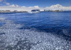Антарктический полуостров является одним из самых быстрых регионов потепления на планете