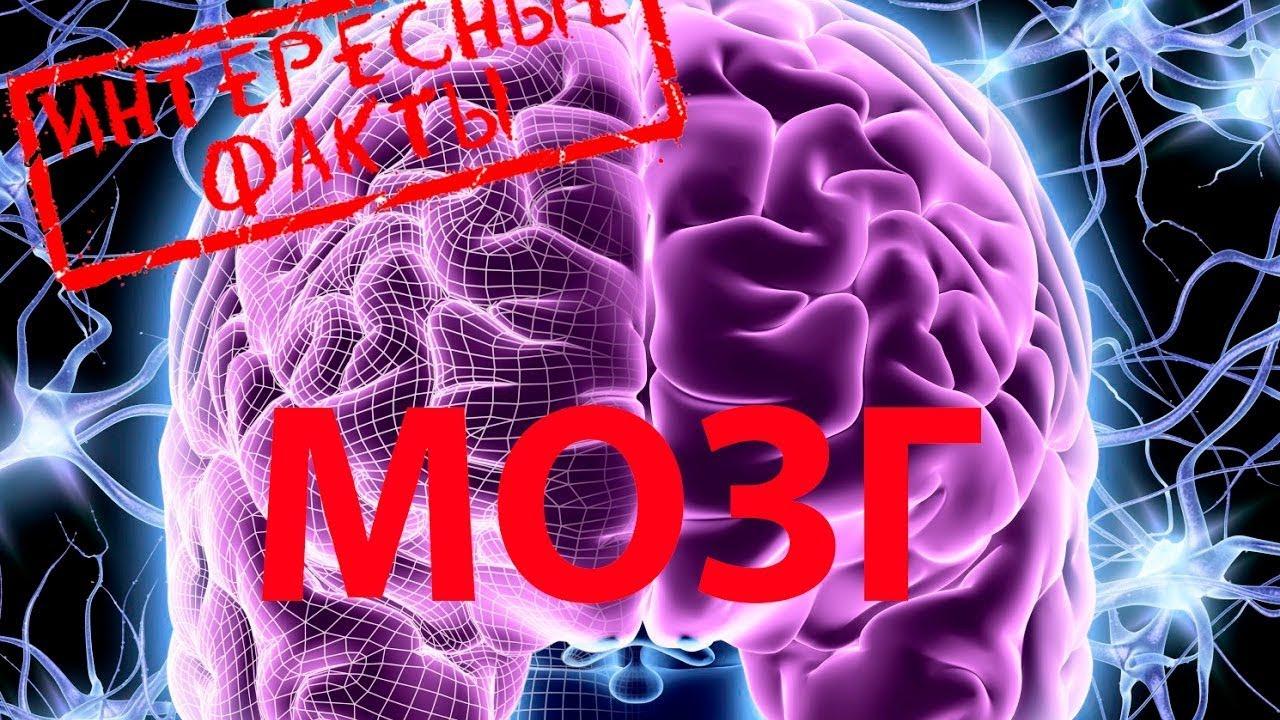 10 Интересных фактов о человеческом мозге.