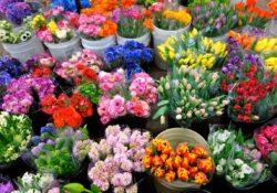 Цветы лучше покупать в интернет-магазине