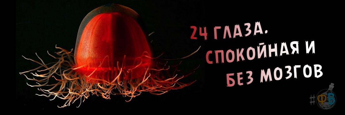 24 глаза, спокойная и без мозга. Интересные факты о медузах