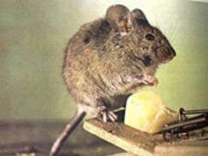 болезни которыми можно зариться от животного