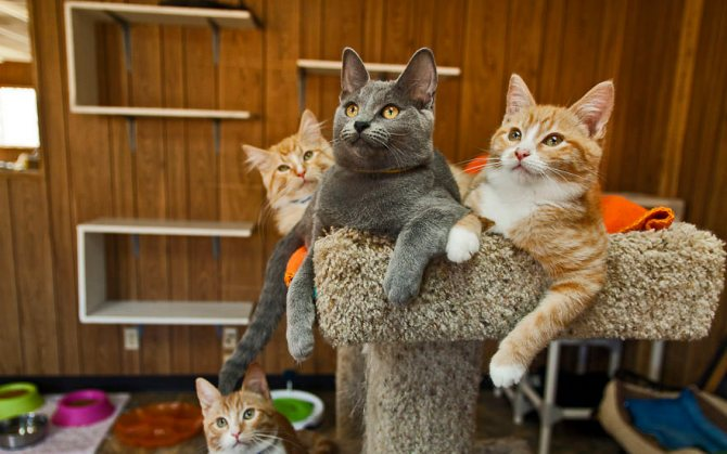 Если вы решили завести котика! Интересный гайд.