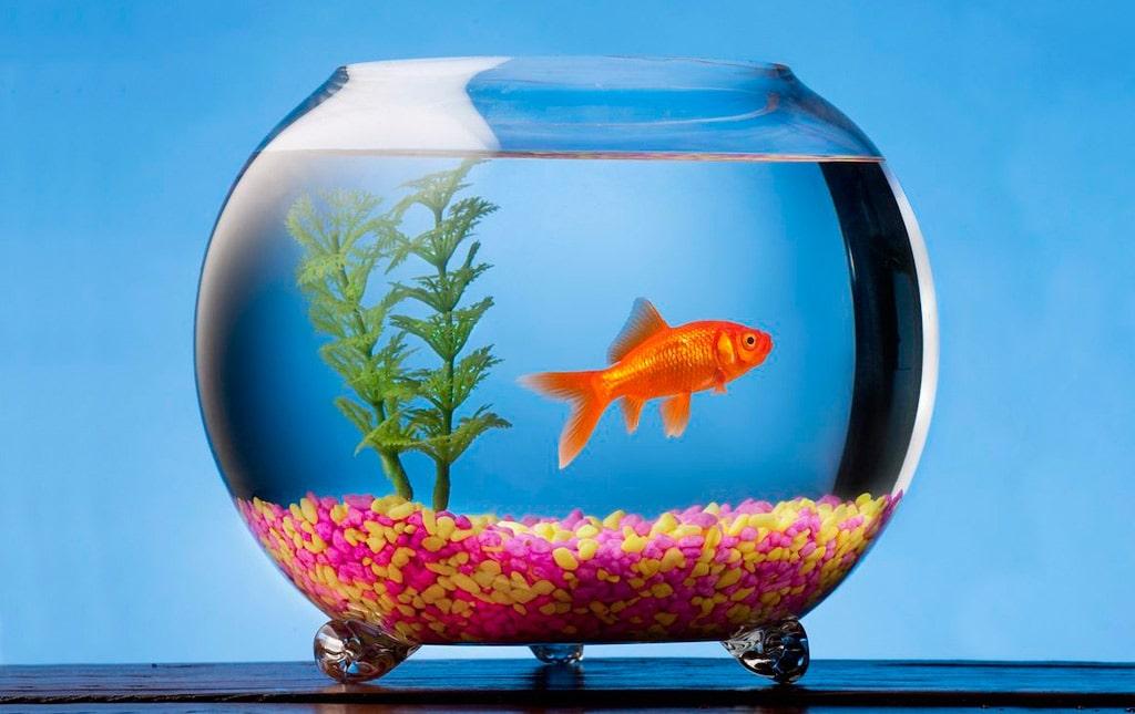 интересные факты об аквариумах