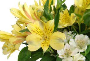 интересное о растении альстромерия