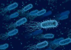 Как с помощью дождя распространяются бактерии и вирусы