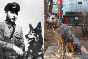 Самые известные животные в истории России Ингус