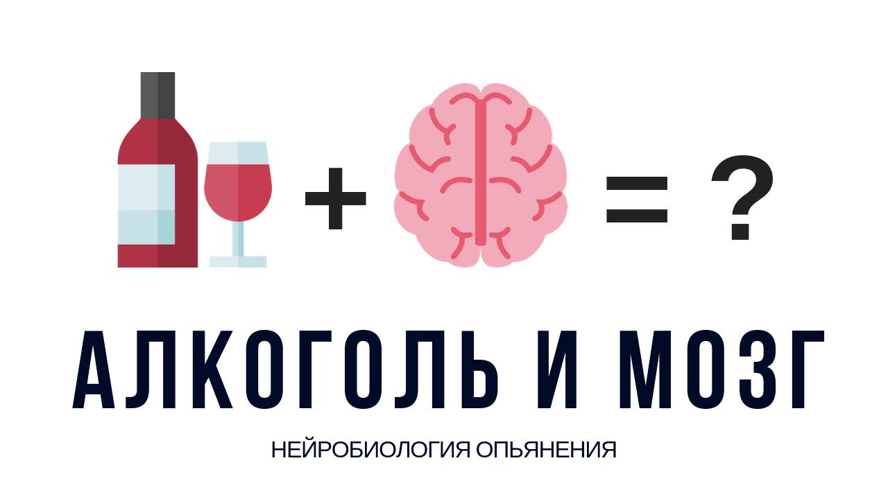 Как происходит опьянение? Интересные факты об организме человека