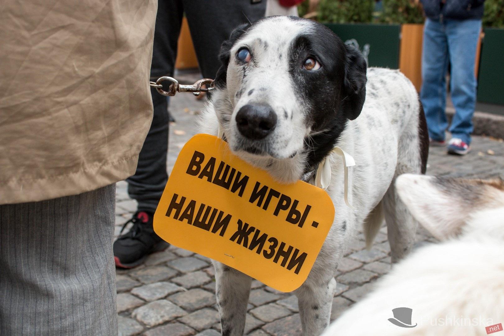 о правах животных в германии