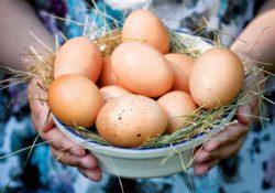Секреты хранения яиц