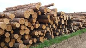 Древесина для строительства в предложении лесопилки