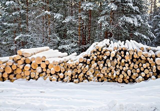 Выбор материала для возведения дома: зимний лес