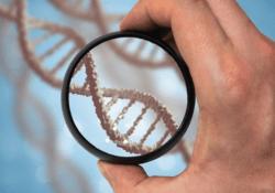 Важность теста ДНК в современном мире
