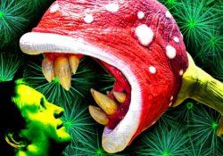 Самые ядовитые растения мира