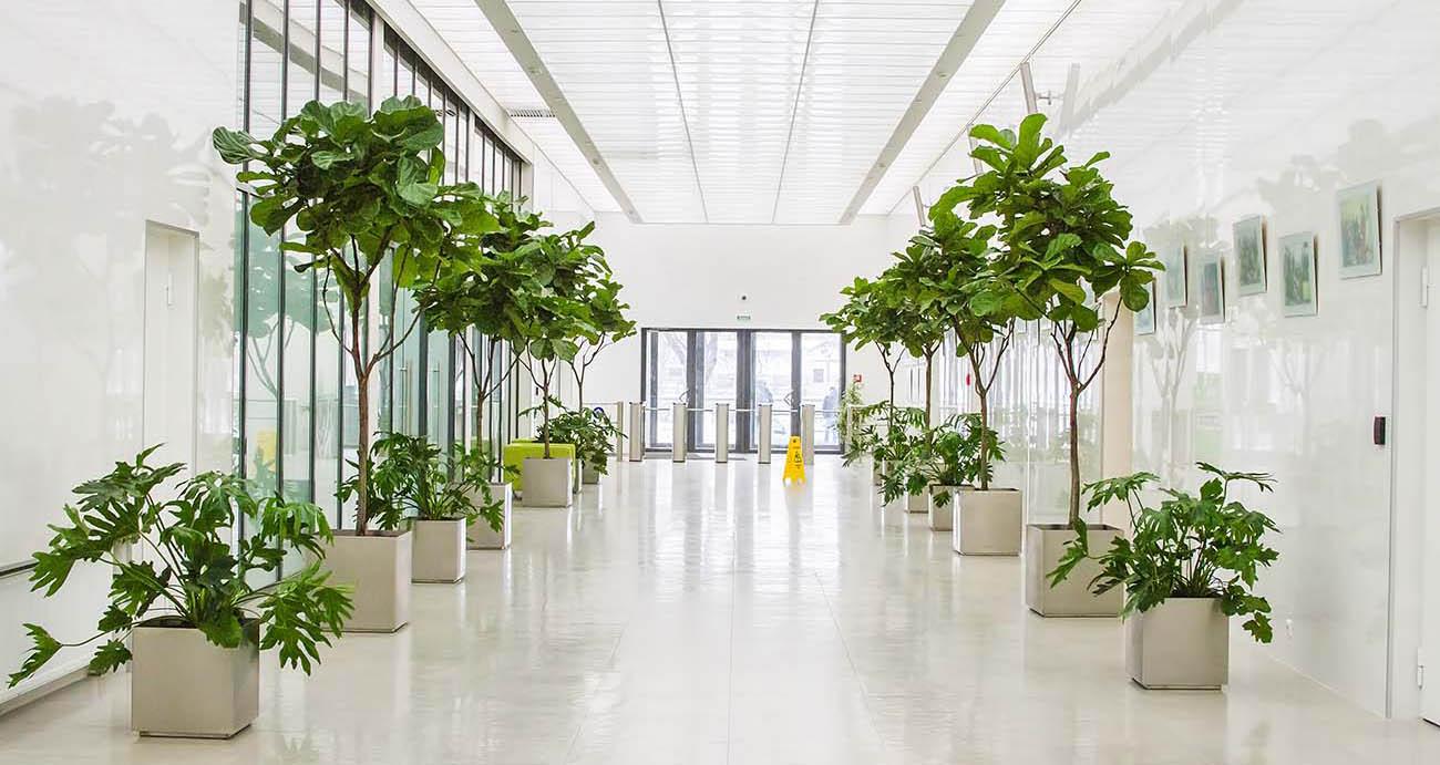 Современное озеленение рабочего места