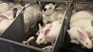 Запуск бизнеса по разведению кроликов в формате под ключ