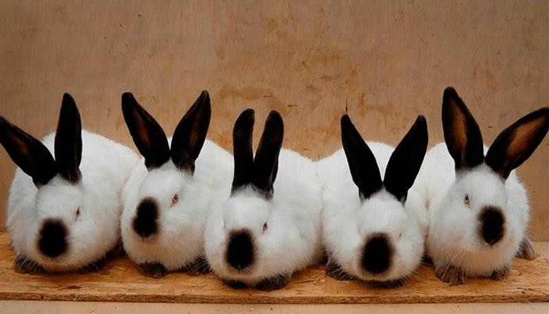 """Запуск бизнеса по разведению кроликов в формате """"под ключ"""""""