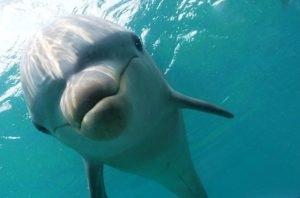 Самые интересные и необычные факты о животных