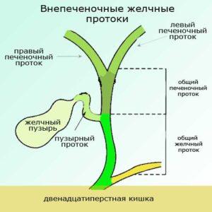 Как желчь покидает организм человека